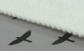 POLYNETEX 150g bílý